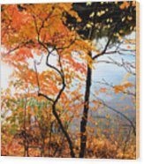 Red Autumn Leaves 5 Wood Print