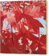Red Autumn Leaves Art Prints Canvas Fall Leaves Baslee Troutman Wood Print