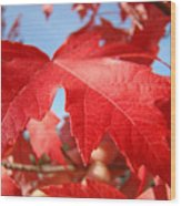 Red Autumn Leaves Fall Art Colorful Autumn Tree Baslee Troutman Wood Print