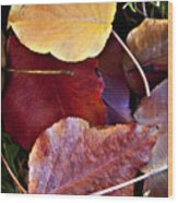 Red Autumn Leaves Wood Print