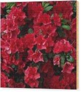 Red Azalea Blooms Wood Print