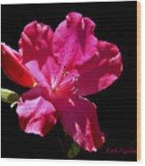 Red Azalea Wood Print