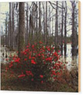 Red Azaleas In The Swamp Wood Print