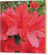 Red Azaleas Wood Print