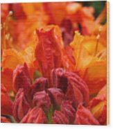 Red Azaleas Orange Azalea Flowers 9 Floral Giclee Art Prints Baslee Troutman Wood Print