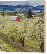 Red Barn And The Pear Orchards Wood Print
