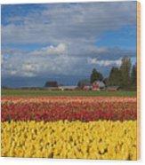 Red Barn Tulip Farm Wood Print