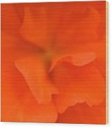 Red Begonia Wood Print