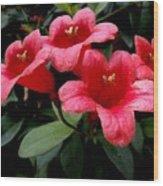 Red Bell Flowers Wood Print
