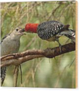 Red Bellied Woodpecker Feeding Young Wood Print