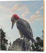 Red-bellied Woodpecker - Tree Top Wood Print