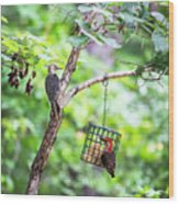 Red-bellied Woodpecker 2016 14 Wood Print