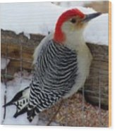 Red Bellied Woodpecker 5 Wood Print