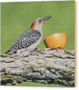 Red-bellied Woodpecker At The Feeder Wood Print