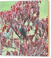 Red Bellied Woodpecker In Dogwood Wood Print by Alan Lenk