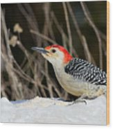 Red-bellied Woodpecker In The Snow Wood Print