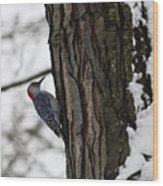 Red Bellied Woodpecker No 1 Wood Print