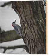 Red Bellied Woodpecker No 2 Wood Print