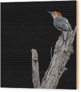 Red-bellied Woodpecker Portrait Wood Print
