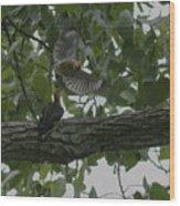 Red-bellied Woodpeckers Wood Print