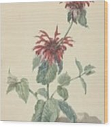 Red Bergamot In A Landscape, Aert Schouman Surroundings Of, C. 1750 - C. 1775 Wood Print