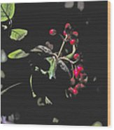 Red Berries And Foliage Wood Print