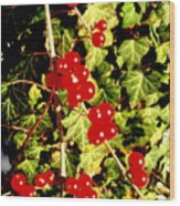 Red Berries And Ivy Wood Print