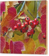 Red Berries Fall Colors Wood Print