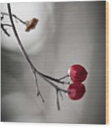 Red Berries Wood Print by Mandy Tabatt
