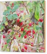 Red Berry New England Wood Print