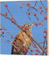 Red Berry Robin Wood Print