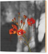 Red Bird Of Paradise Wood Print