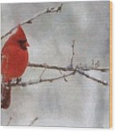 Red Bird Of Winter Wood Print by Jeff Kolker