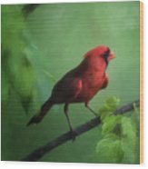 Red Bird On A Hot Day Wood Print