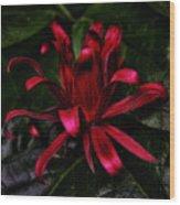 Red Bloom Wood Print
