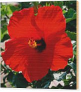 Red Bloomers Wood Print