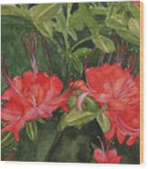 Red Blooms On The Parkway Wood Print