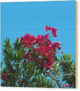 Red Bougainvillea Glabra Vine Wood Print