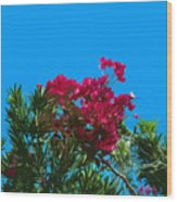 Red Bougainvillea Glabra Vine In Juniperus Virginiana Tree In Co Wood Print