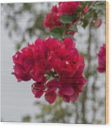 red bougainvillea in Laguna Guerrero Wood Print