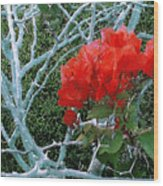 Red Bougainvillea Thorns Wood Print