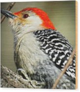 Red-breasted Woodpecker 1 Wood Print