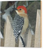 Red Breasted Woodpecker On Fence Wood Print