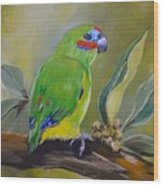 Red Browed Fig Parrot  Wood Print