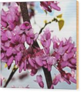 Red Bud 2011-1 Wood Print