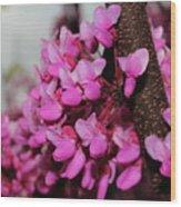 Red Bud 2011-3 Wood Print