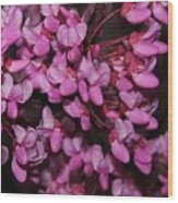 Red Bud 2011-4 Wood Print