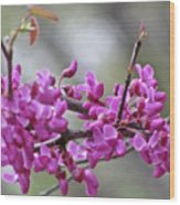 Red Bud Blossoms Wood Print