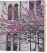 Red Buds And San Antonio City Hall Wood Print