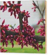 Red Buds  Wood Print